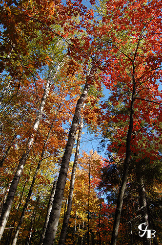 Photo: Fall colors in northern Minnesota. Photo by Chris J. Benson