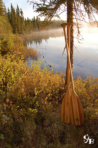 Photo: Paddles leaning against a tree near a lake in Minnesota at sunrise. Photo by Chris J. Benson
