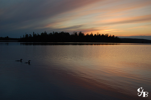 Photo: Loons on a lake at sunset in the BWCA in northern Minnesota. Photo by Chris J. Benson